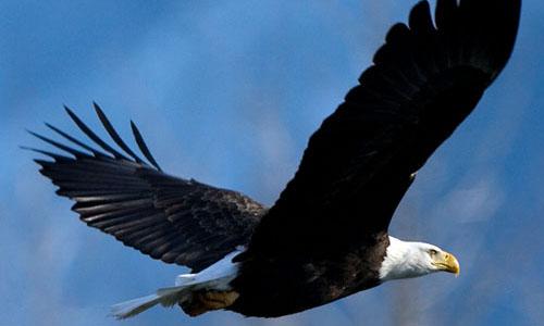 Los patos hacen bulla…las águilas vuelan